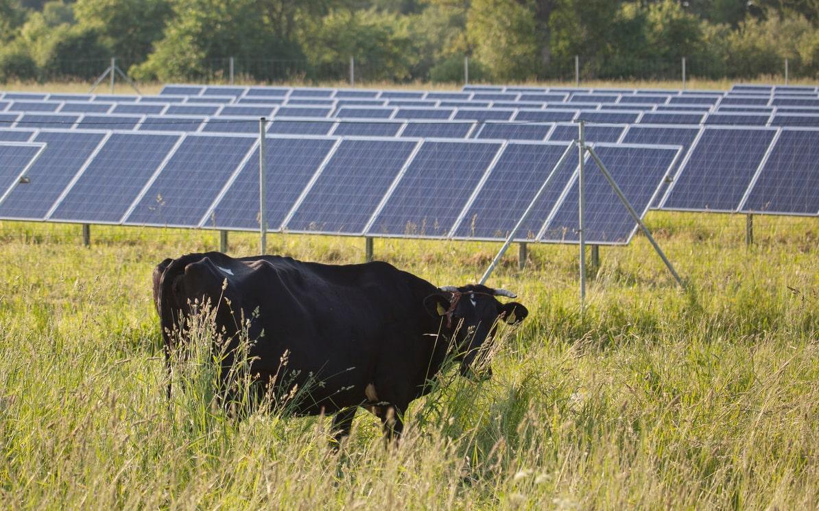 Friesland verbiedt tijdelijk nieuwe zonneparken op landbouwgrond